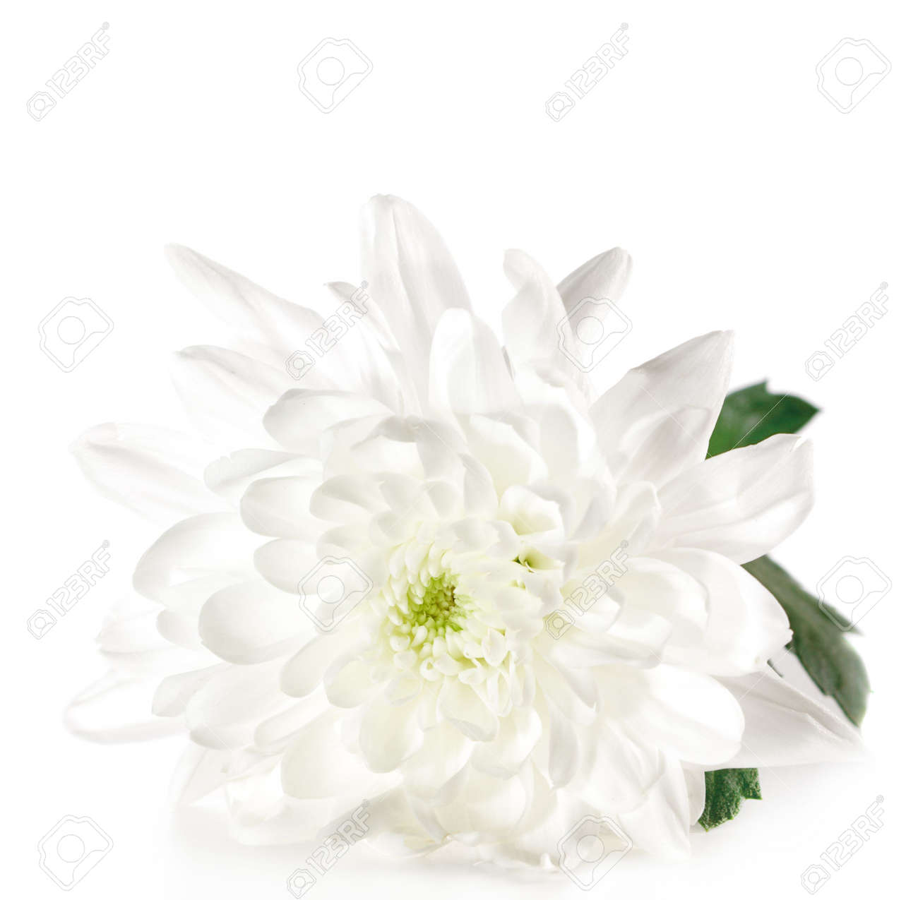 White Flower with Green Leaf Isolated on White Background Stock Photo - 4793442