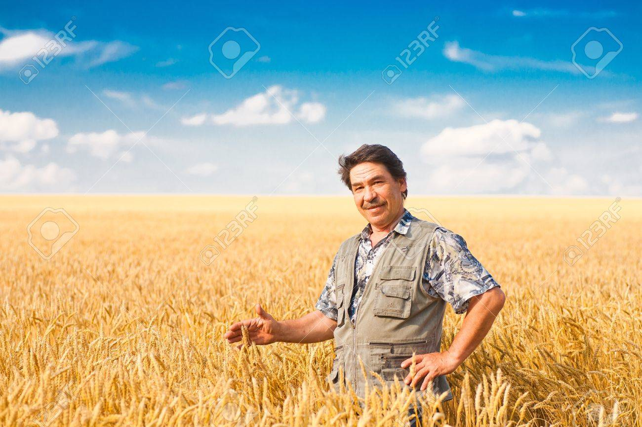 farmer standing in a wheat field, looking at the crop Stock Photo - 10129630