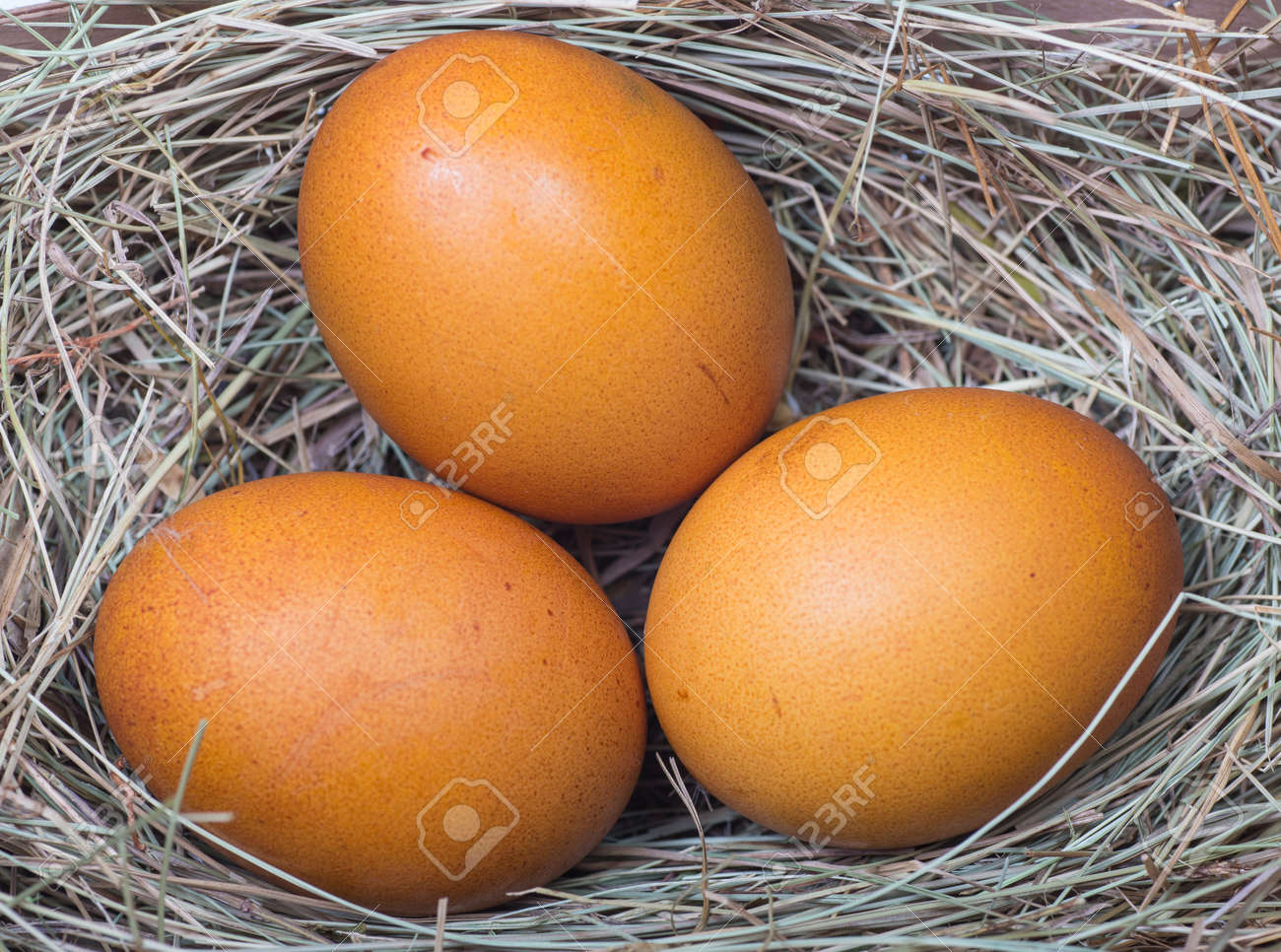 Macro shoot of brown eggs at hay nest in chicken farm Stock Photo - 18986584