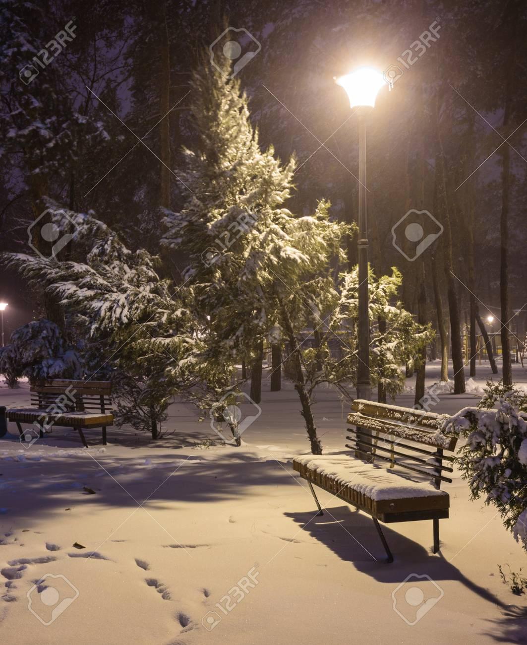 Hiver place Tapis Scène de Nuit congelés arbres 4er Set Lavable