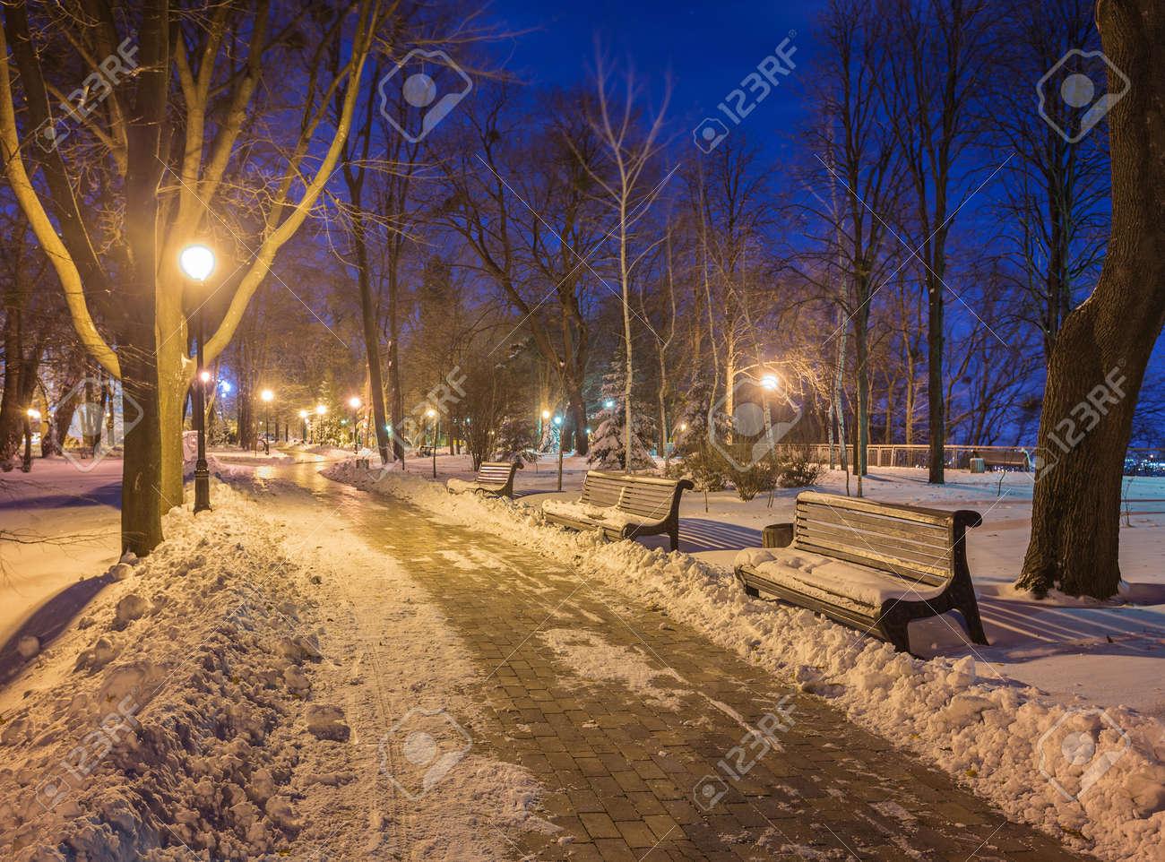 bench lighting. Under Bench Lighting. Stock Photo - Winter Night Landscape- Trees And Shining Lighting E