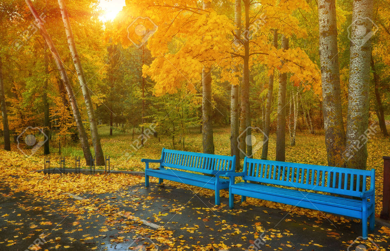Autumn Park Bench Rainy Texture Background Rain In Autumn Park Drops Of Water Wind