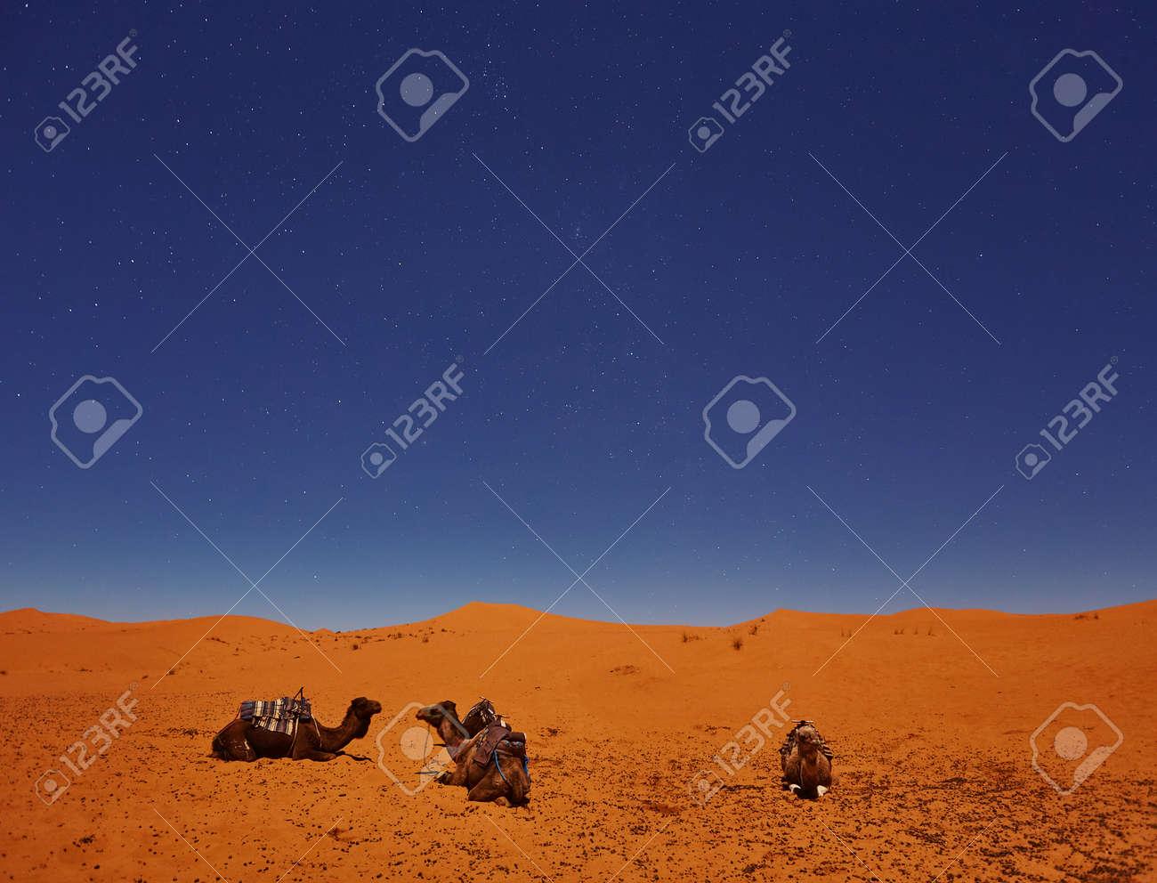 Camels sleep under the starry sky in sahara desert, Morocco. - 169020202