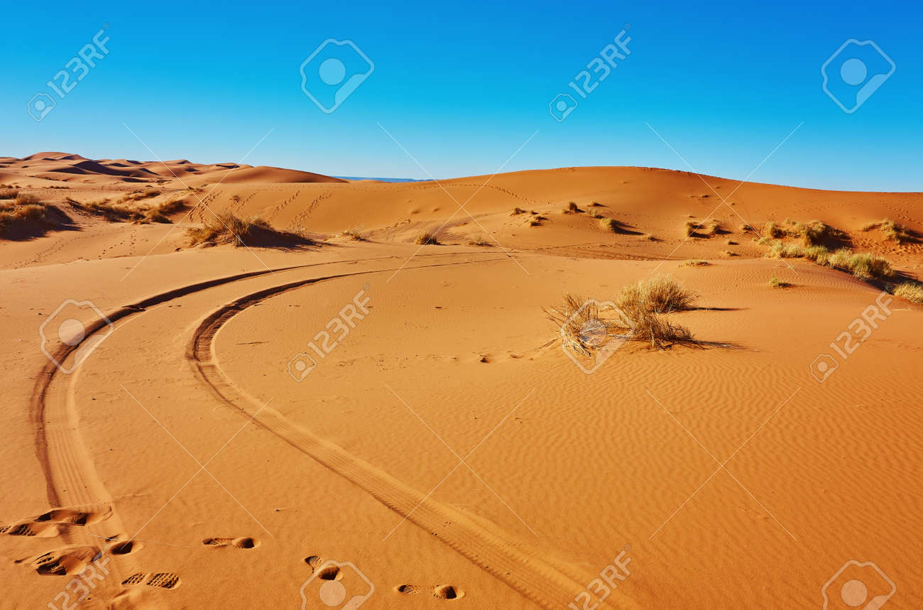 Sand dunes in the Sahara Desert, Merzouga, Morocco - 169020335