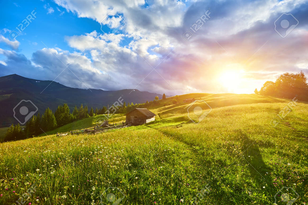 gorgeous foggy sunrise in Carpathian mountains. lovely summer landscape of Volovets district. purple flowers on grassy meadows and forested hill in fog. mountain Pikui in the distance. - 169020545