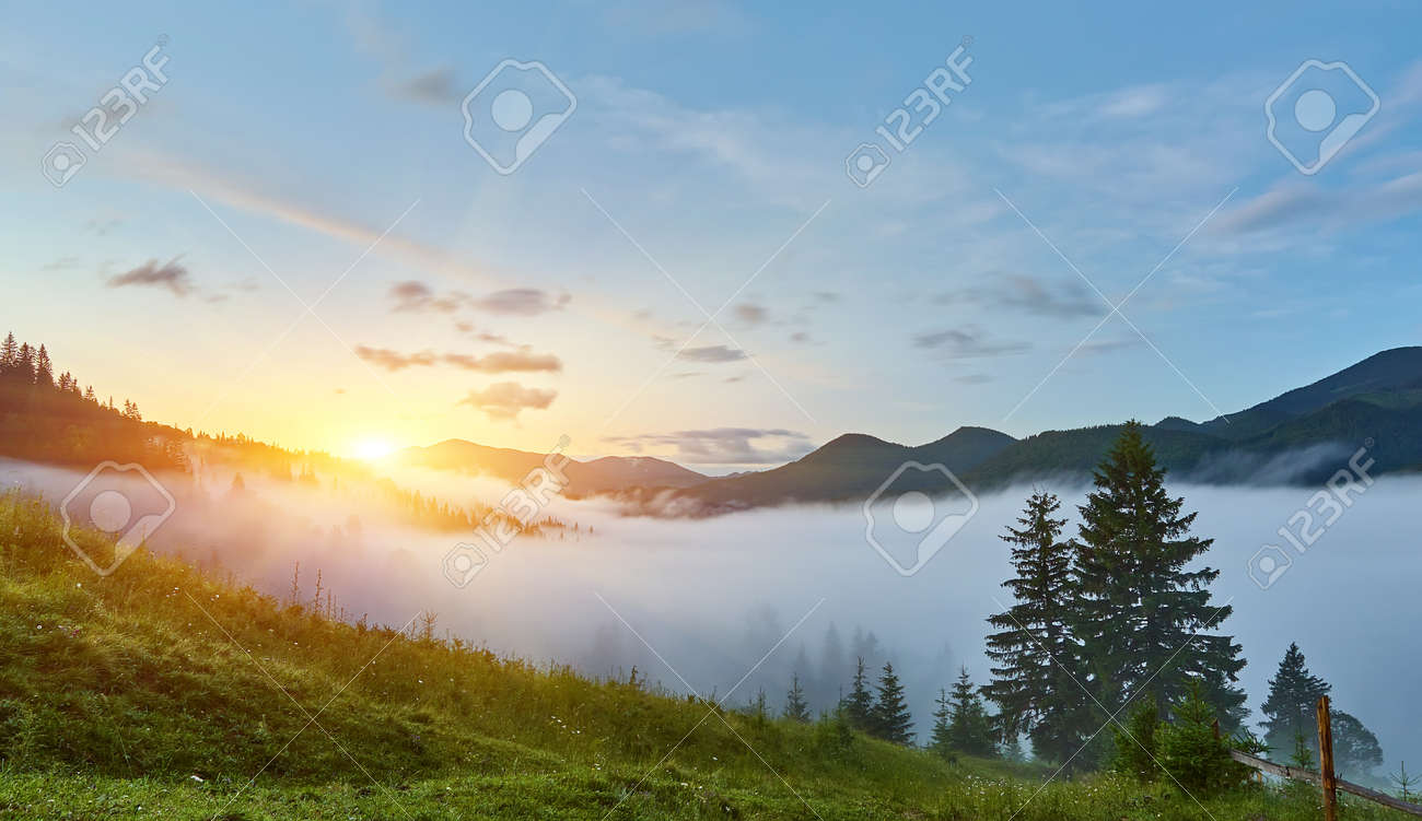 gorgeous foggy sunrise in Carpathian mountains. lovely summer landscape of Volovets district. purple flowers on grassy meadows and forested hill in fog. mountain Pikui in the distance. - 169020555