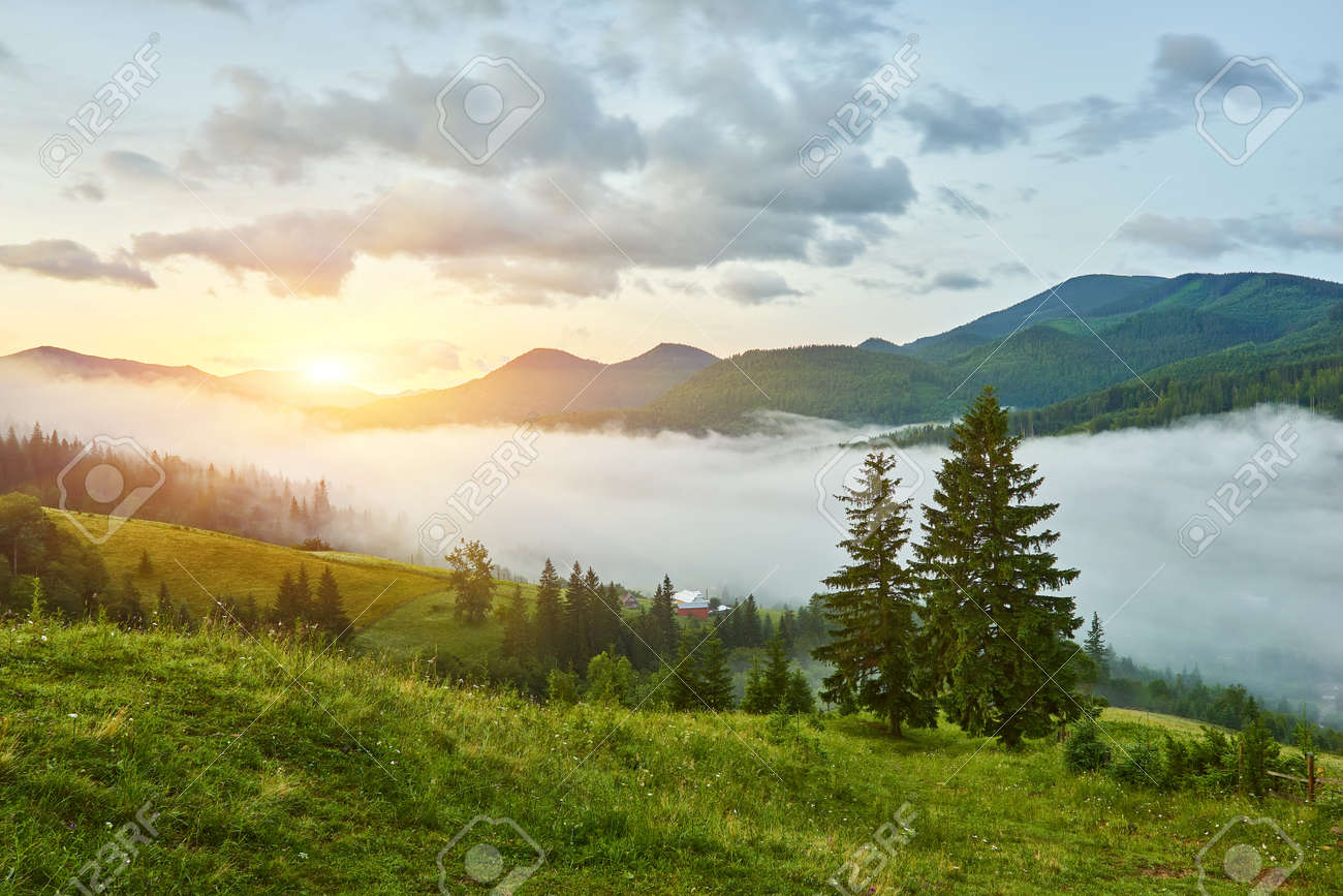 Landscape with fog in mountains and rows of trees - 169020585