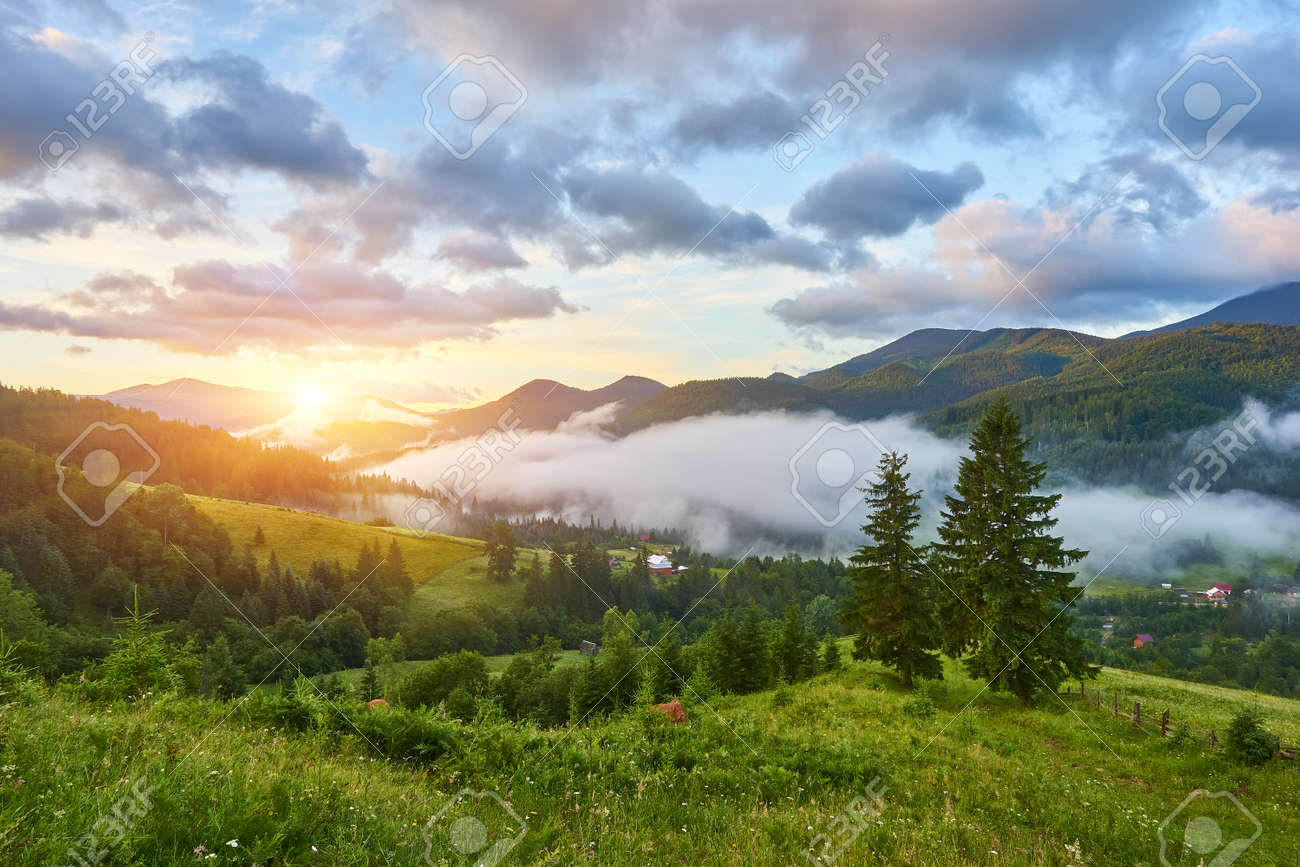 gorgeous foggy sunrise in Carpathian mountains. lovely summer landscape of Volovets district. purple flowers on grassy meadows and forested hill in fog. mountain Pikui in the distance. - 169020685