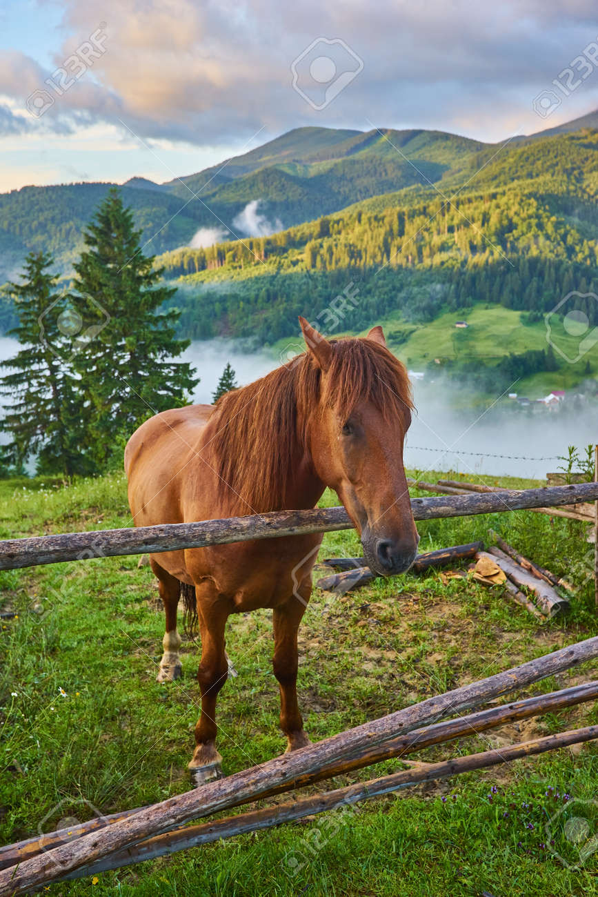 The horse grazes in a mountain pasture where, after rain, green pastures in the alpine zone in the Carpathians are covered with a sea of fog. - 169020741