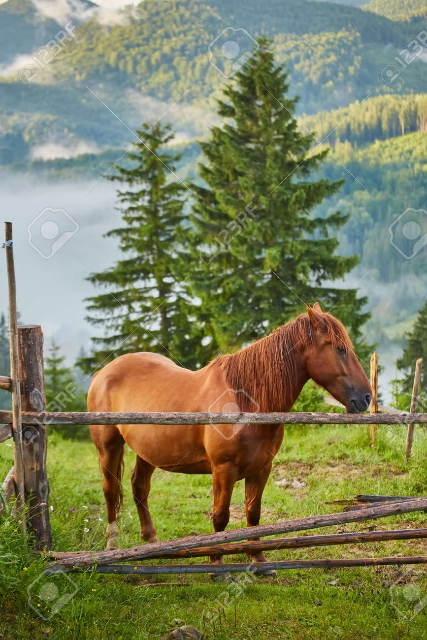 The horse grazes in a mountain pasture where, after rain, green pastures in the alpine zone in the Carpathians are covered with a sea of fog. - 169020893