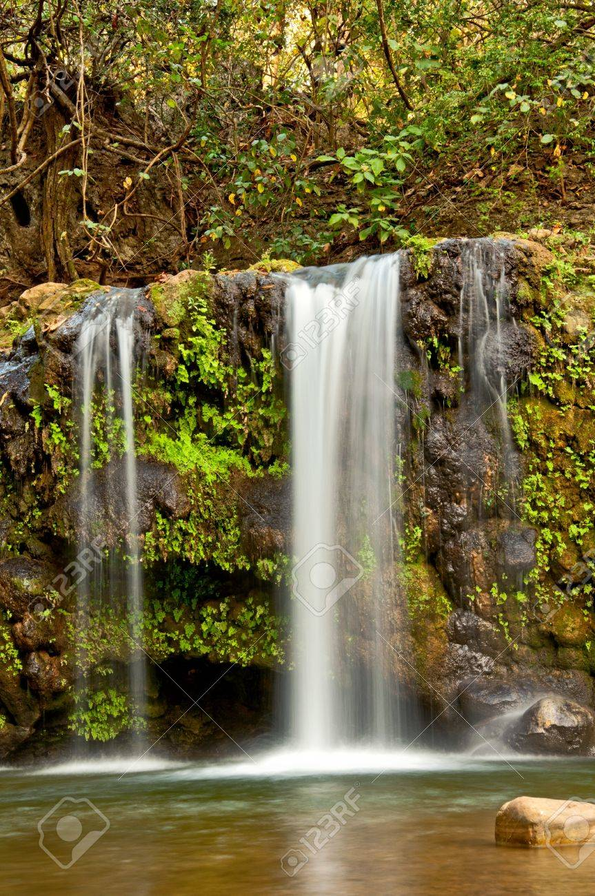 dense forest with waterfall with three streams Stock Photo - 16877390