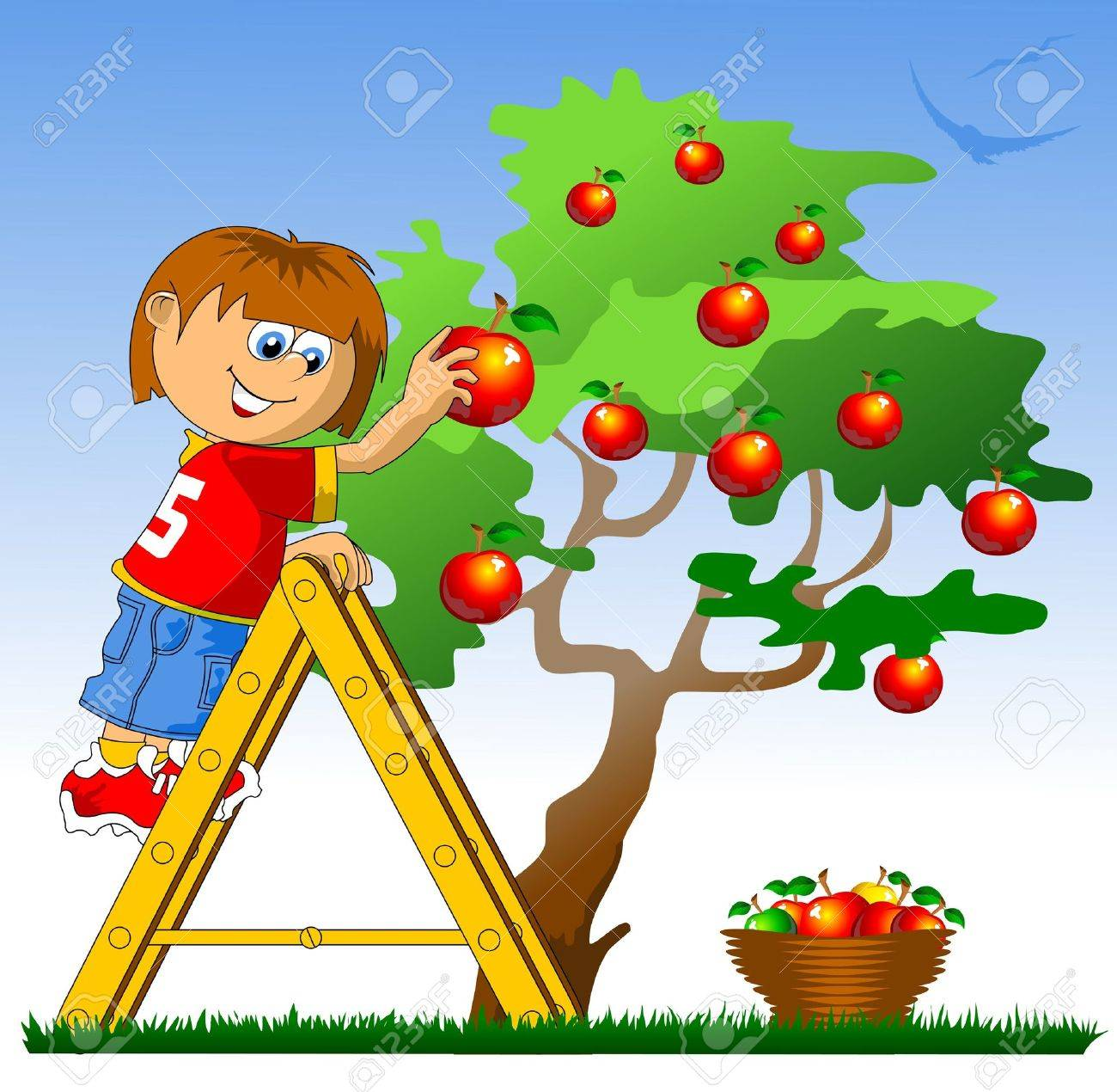 little boy collects red apples  vector illustration ; Stock Vector - 17563517