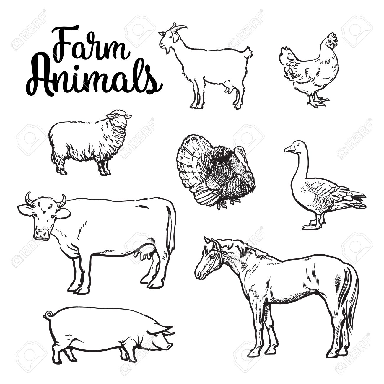 Farm Animals, Cow, Pig, Chicken, Goose, Poultry, Livestock, Color ...