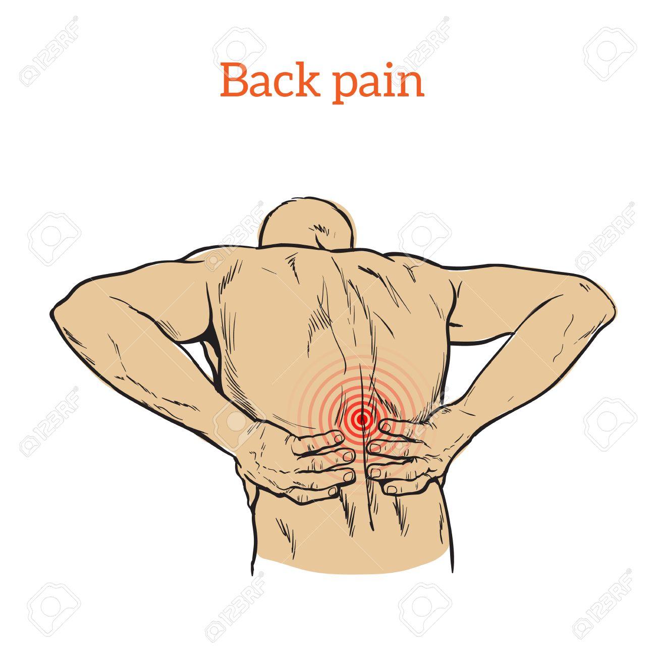 Asombroso Diagrama De La Musculatura De La Espalda Friso - Imágenes ...
