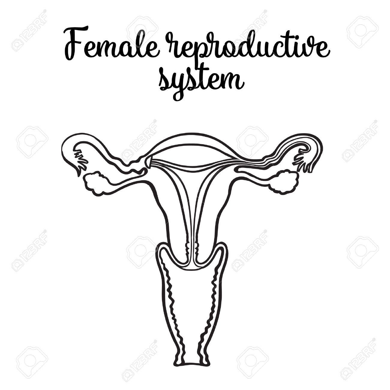 Weiblichen Fortpflanzungssystems, Vektor-Schaltung Skizze Von Hand ...