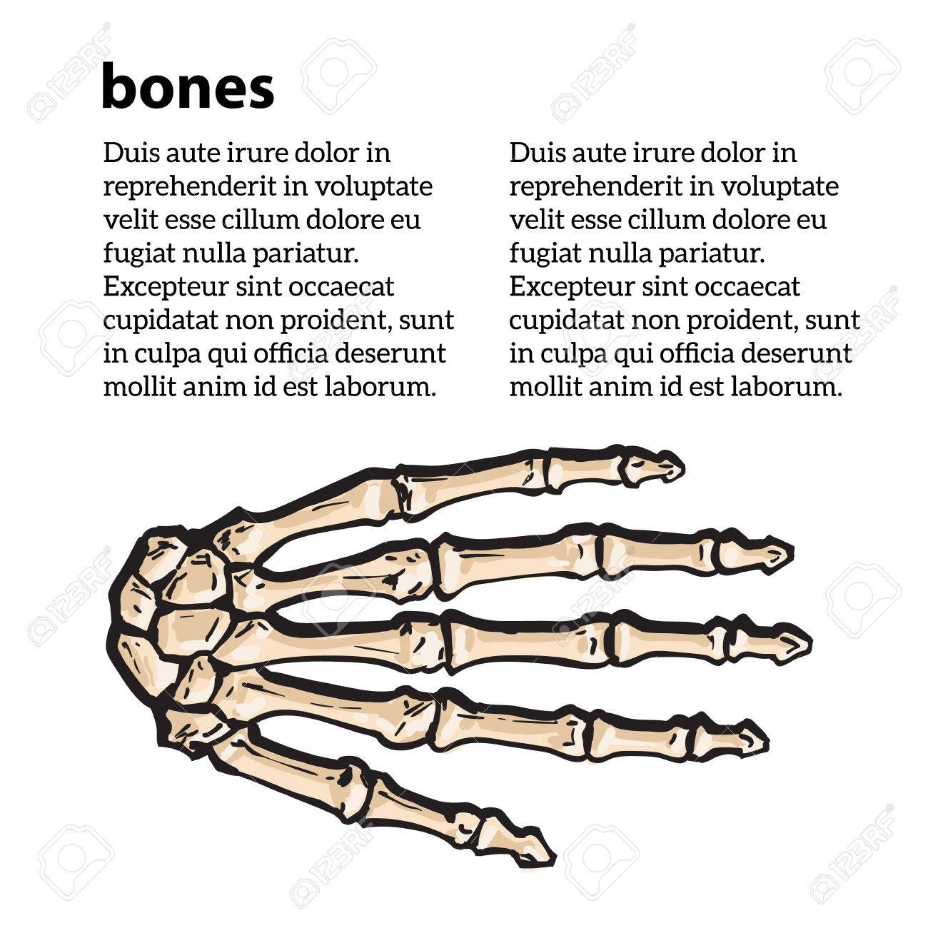 Bones Of The Human Hand Brushes Vector Illustration Sketch Drawn