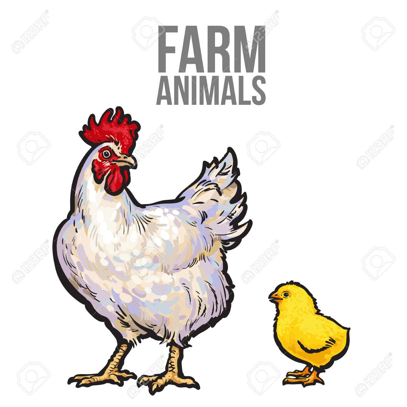 white with yellow chicken vector sketch hand drawn illustration rh 123rf com chicken factory chicken factory process