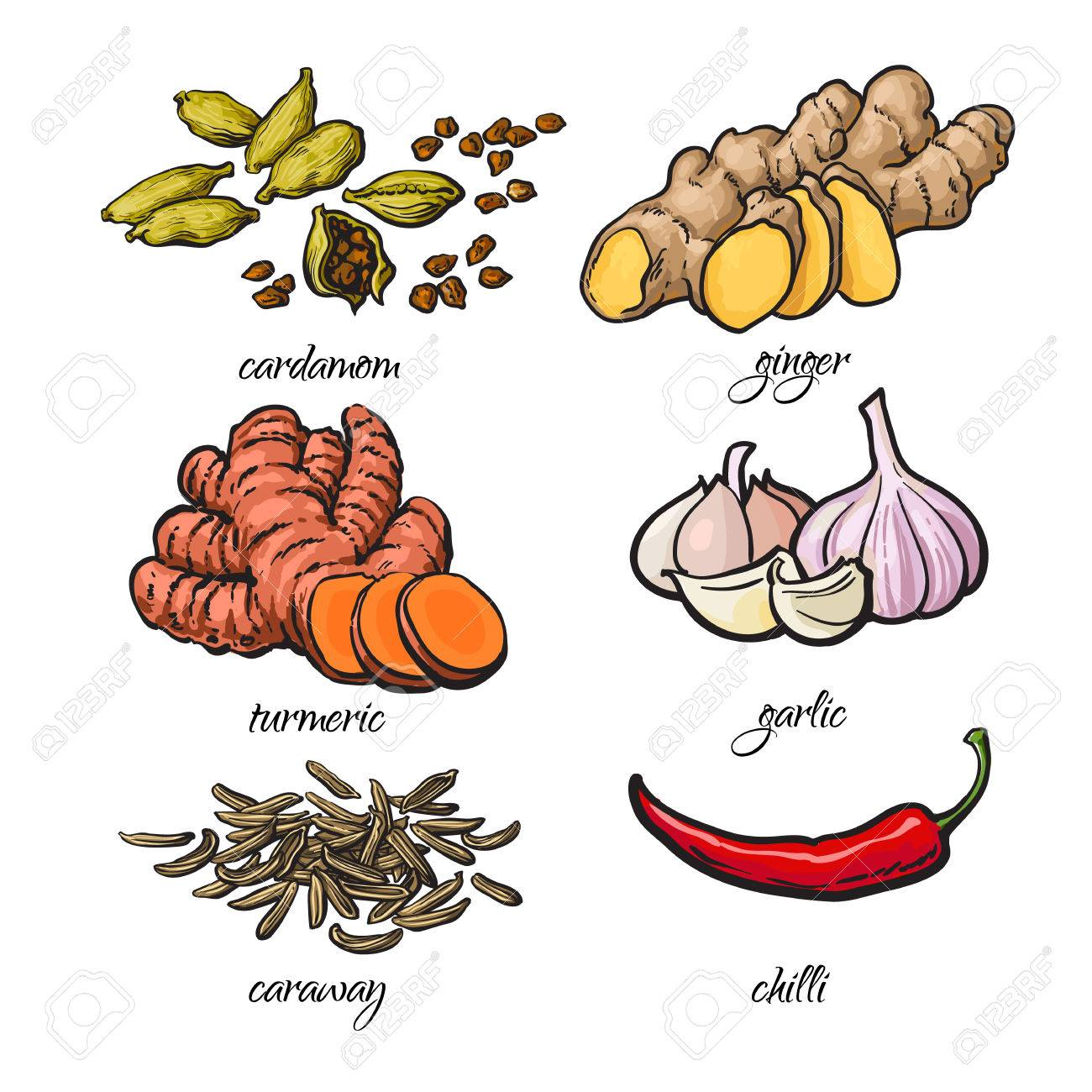 Set of spices - garlic, ginger, turmeric, cardamom, chili, caraway, isolated sketch style vector illustration on white background. Traditional cooking spices in Asian and Indian cuisine - 60096124