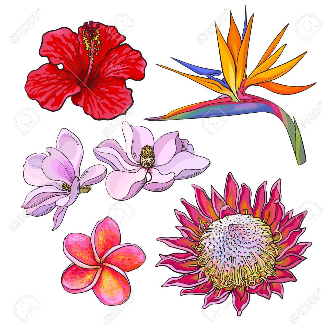 熱帯の花 ハイビスカスプロテアプルメリアバードオブ パラダイス
