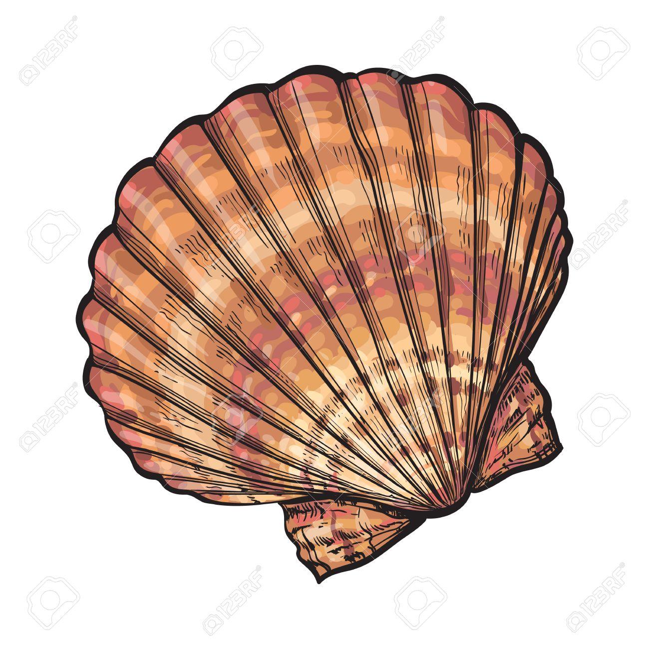 カラフルなホタテ貝殻スケッチ スタイル ベクトル イラスト白背景に