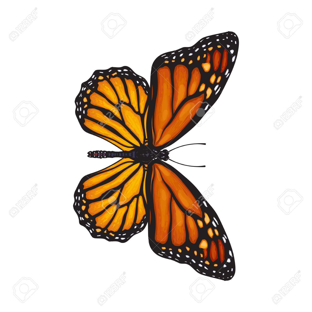 Vue De Dessus Beau Papillon Monarque Illustration Croquis Isole