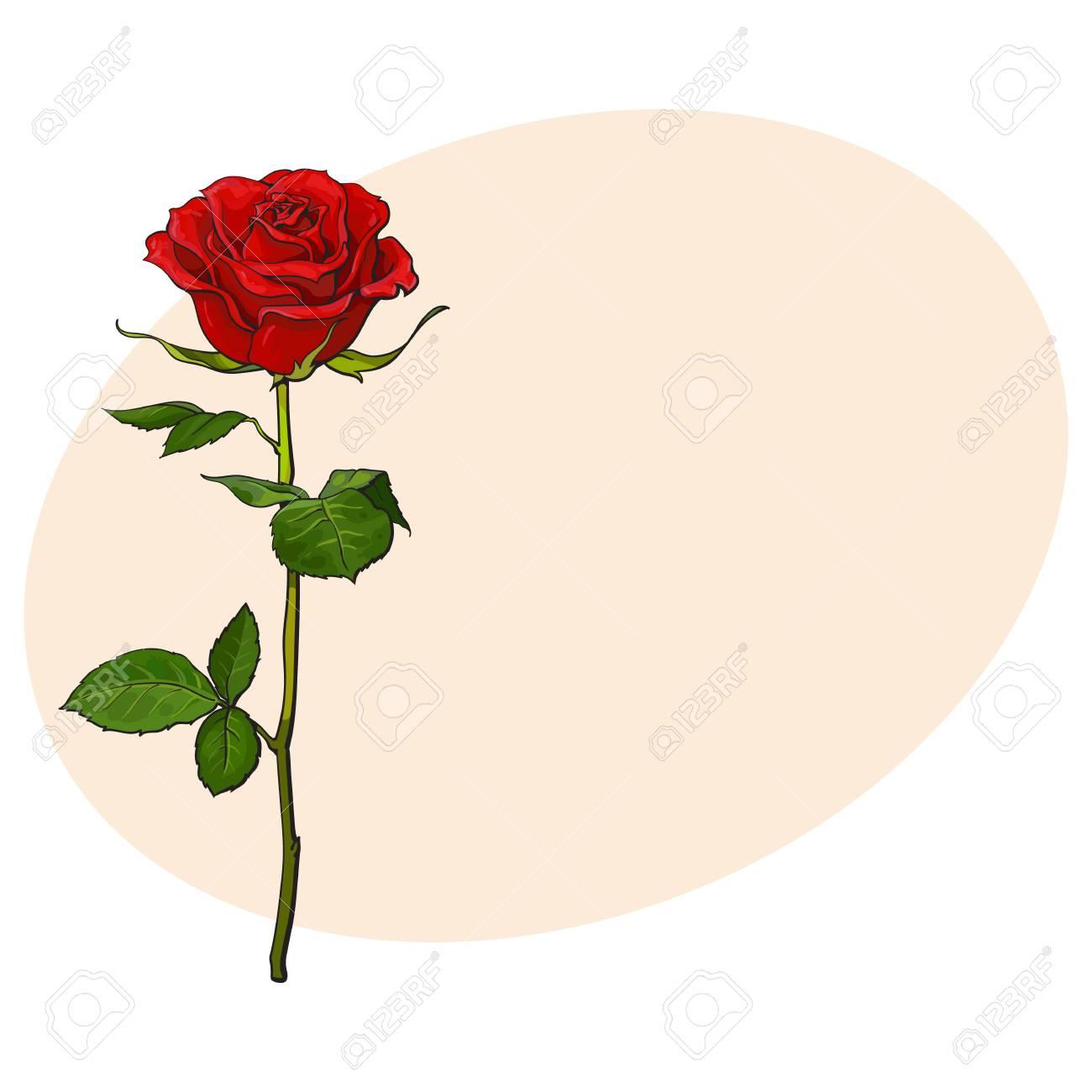 Rouge Foncé Fleur Rose Rubis Avec Des Feuilles Vertes Illustration De Vecteur De Style Croquis Isolé Sur Fond Avec Place Pour Le Texte Dessin