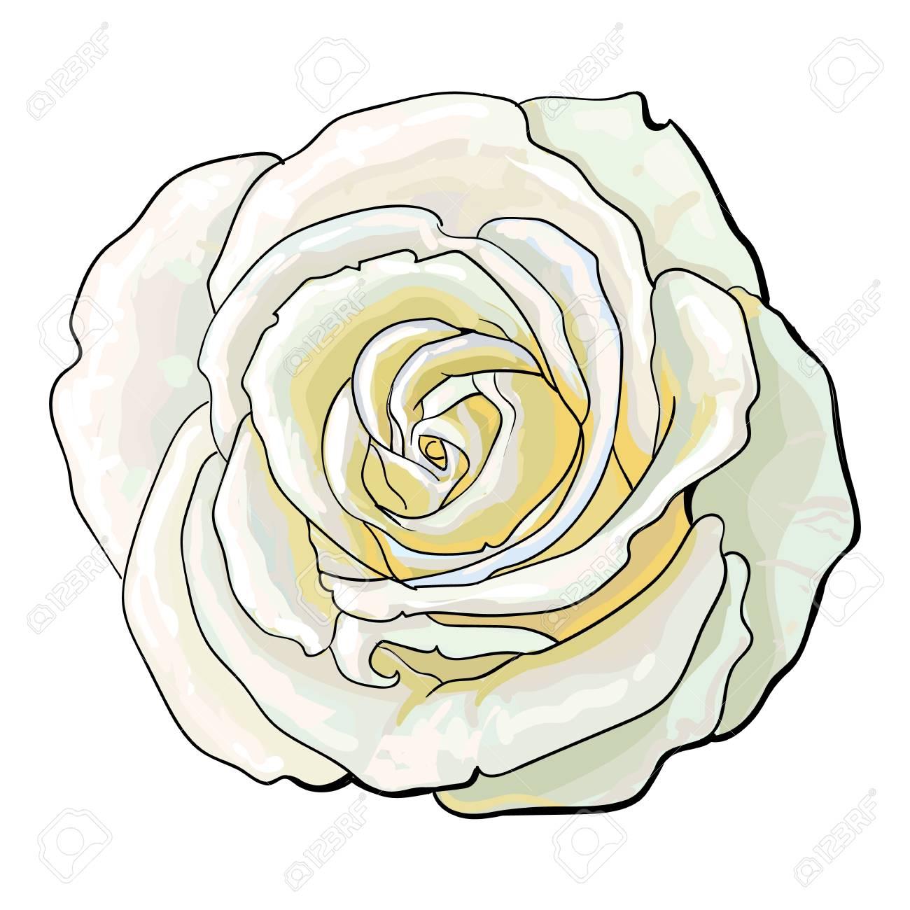 Bourgeon De Rose Blanc Profond Illustration Vectorielle De Croquis