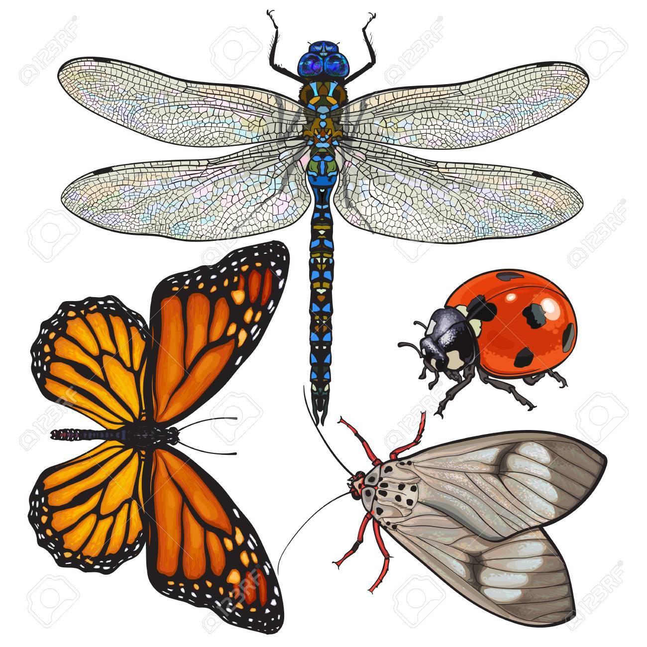 Conjunto De Insectos Como Libélula, Mariposa, Mariquita Y Polilla ...