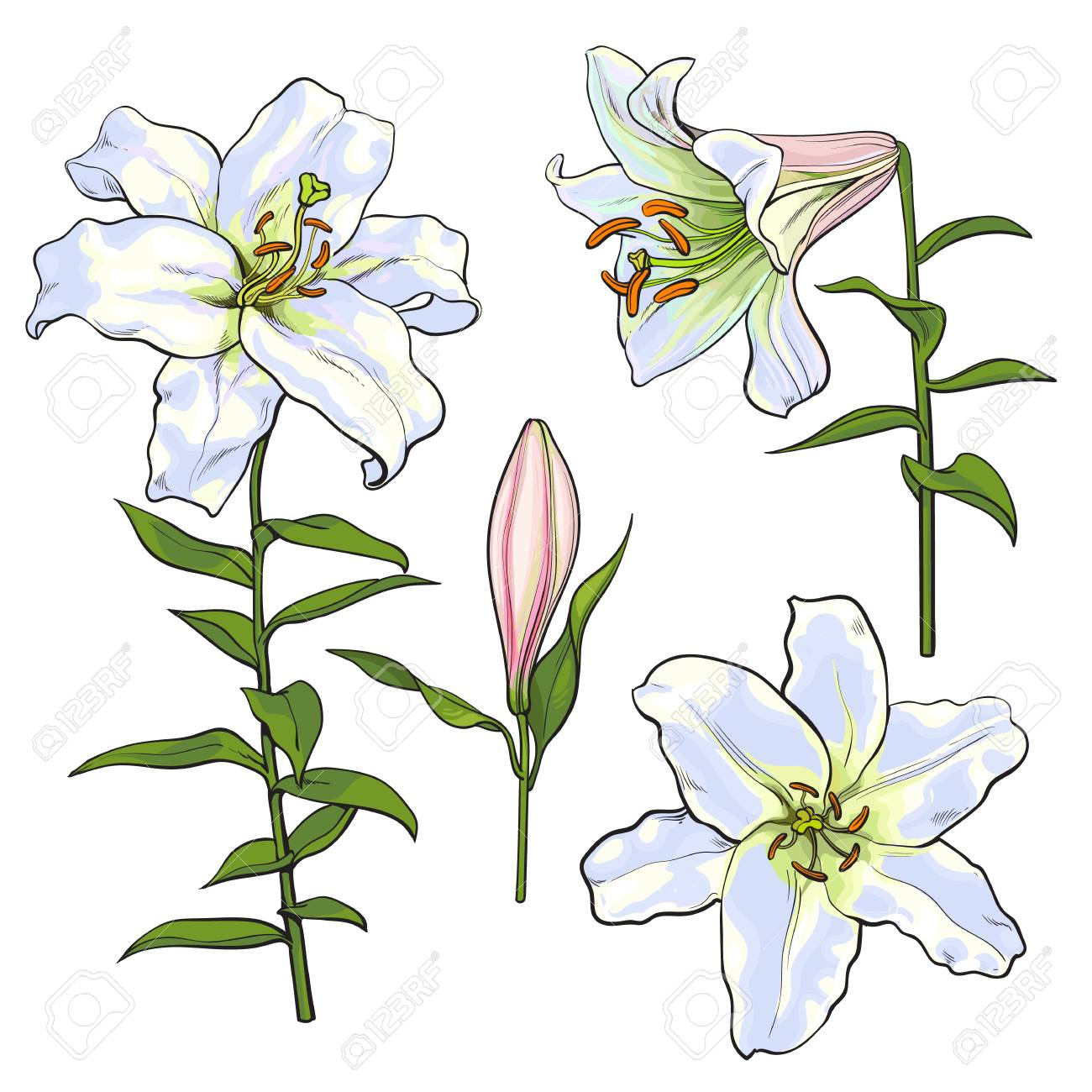 Set of hand drawn white lily flowers in side and top view sketch set of hand drawn white lily flowers in side and top view sketch style vector izmirmasajfo Choice Image