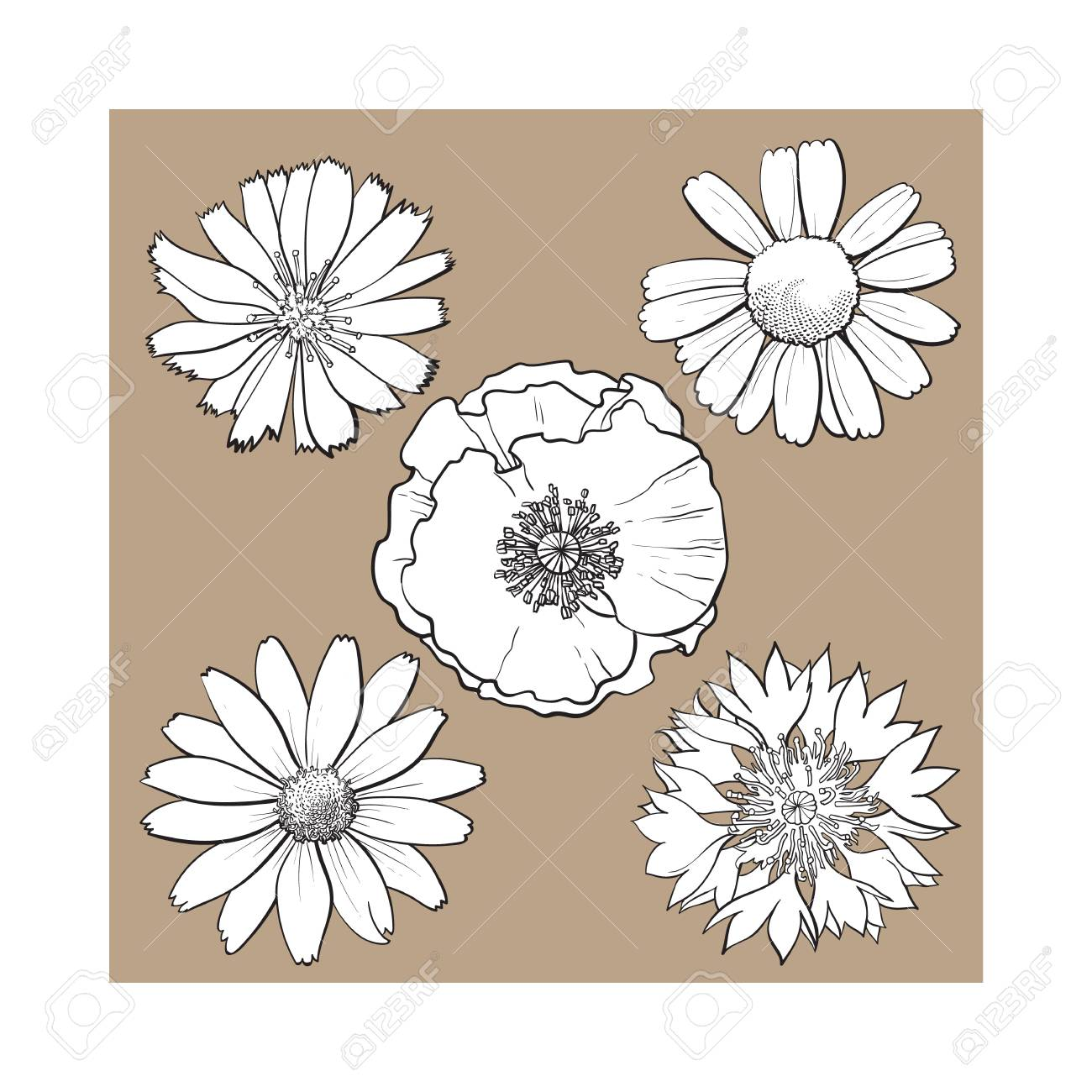 Set Of Wild Black And White Field Flowers Poppy Chamomile