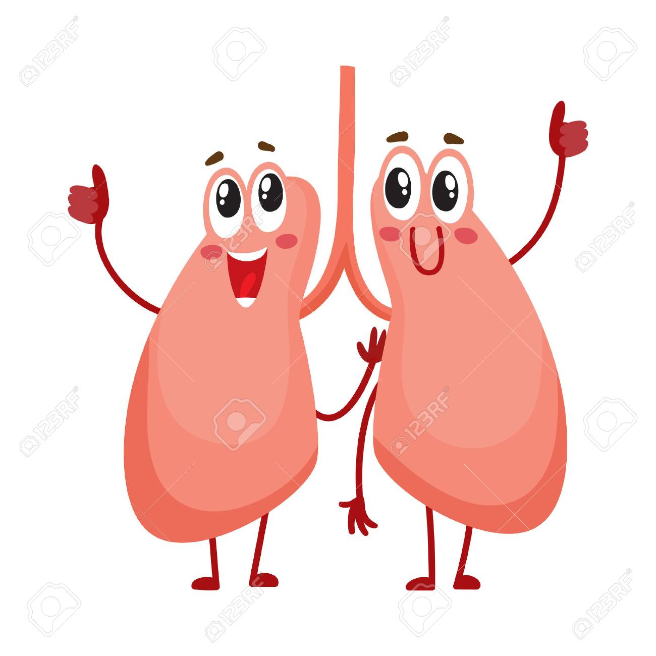Pair of cute and funny, smiling human lung characters, cartoon vector illustration isolated on white background. Healthy human lung characters, respiratory system health care element - 72782770