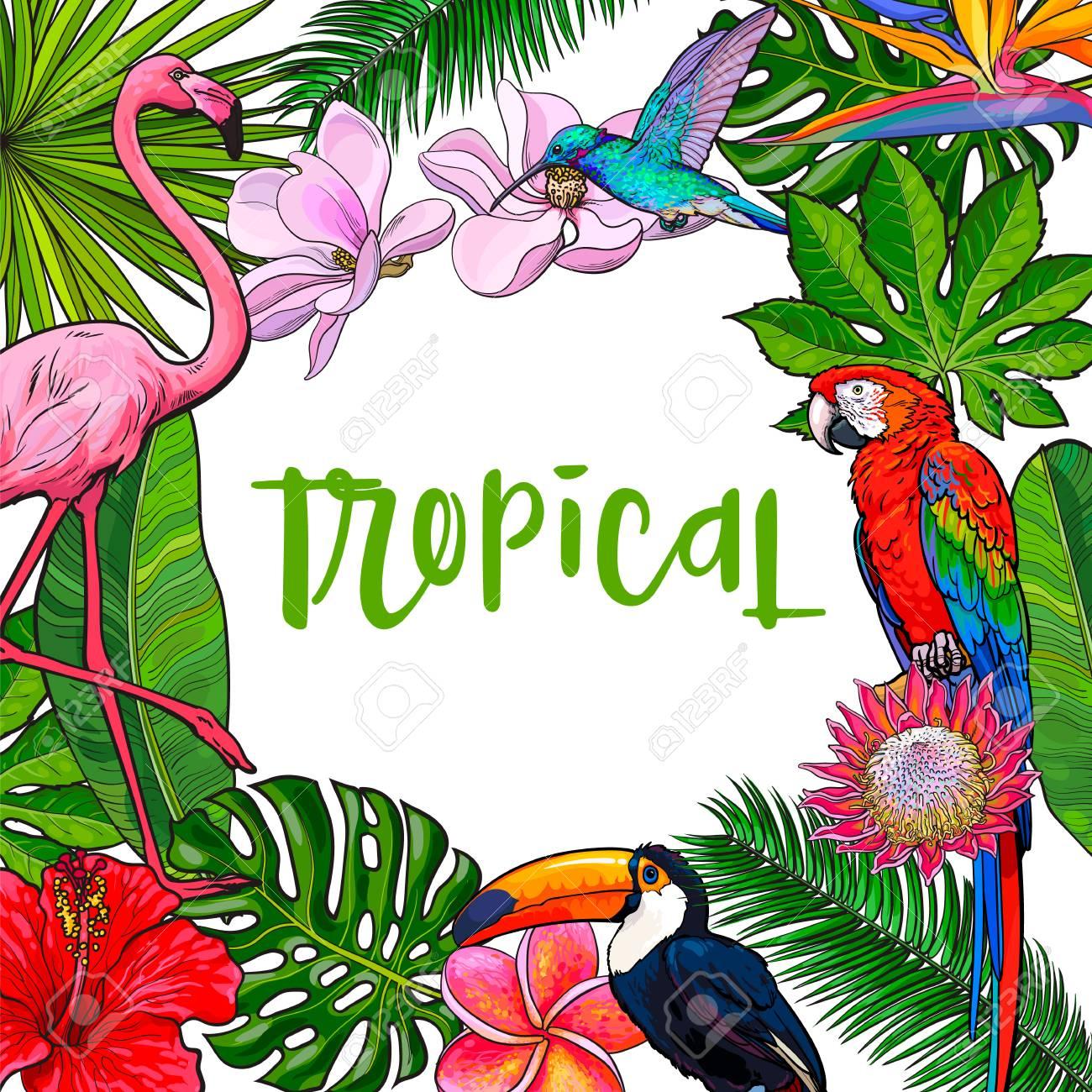 Banner Enmarcado Con Hojas De Palmeras Tropicales, Pájaros, Flores ...