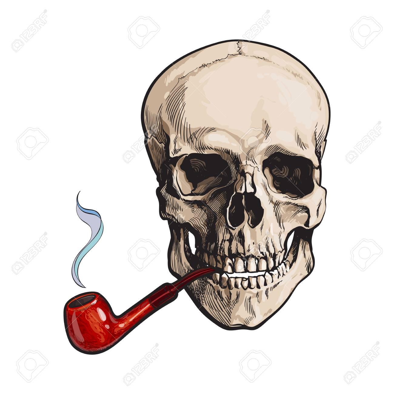 Dé El Tubo De Madera Laqueado Que Fuma Del Cráneo Humano, Ejemplo ...