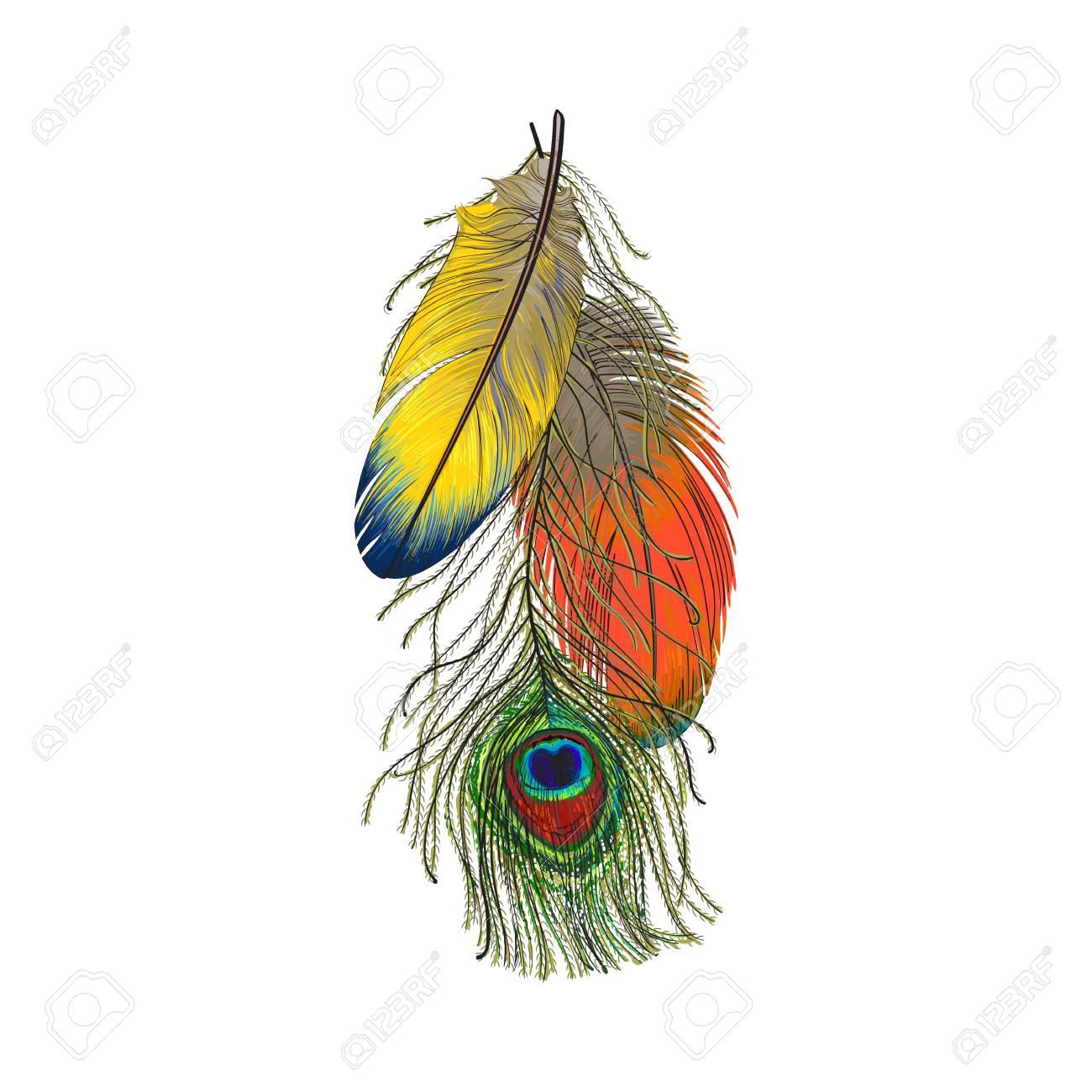 Mao Desenhado Conjunto De Penas De Passaro Colorido Papagaios E