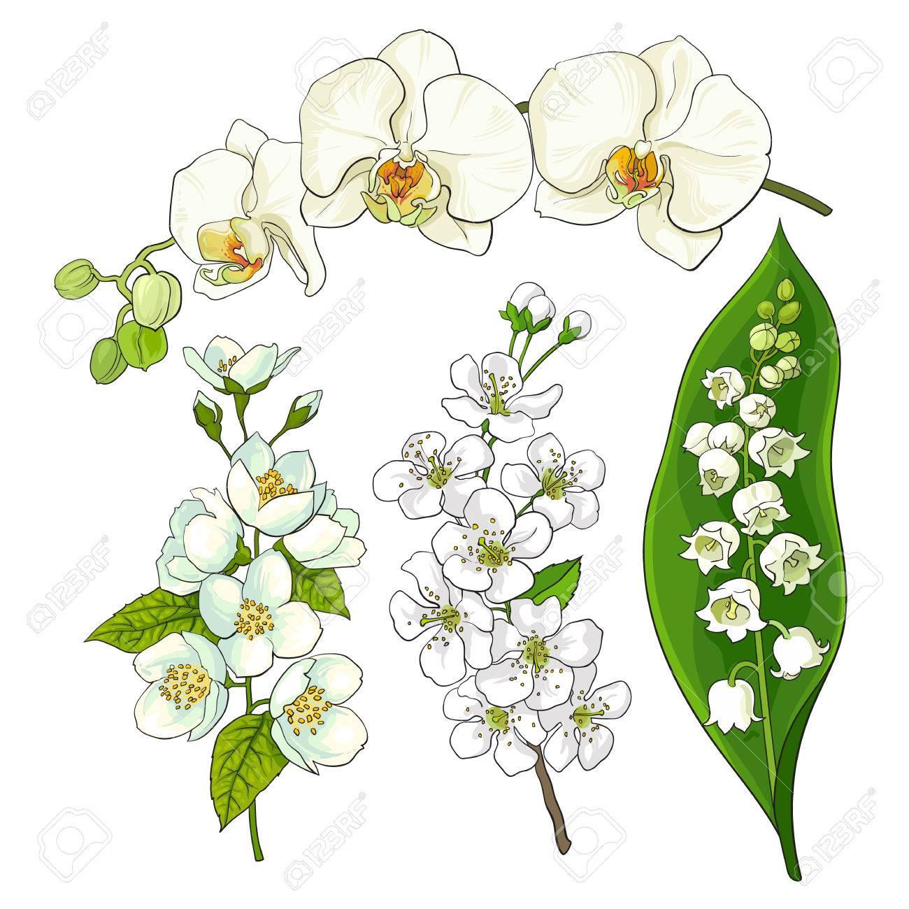 白い花セット スズラン蘭リンゴとサクラの花孤立したスケッチの