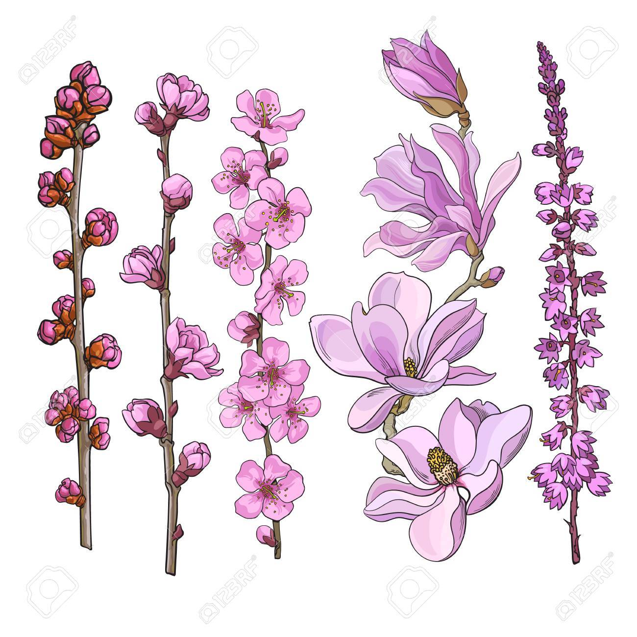 Set Of Hand Drawn Pink Flowers Magnolia Apple And Cherry Blossom
