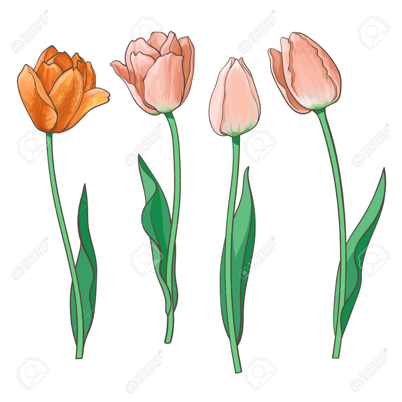 Flores Dibujo Realista