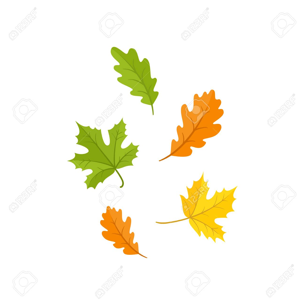 Colorful Set Of Oak And Maple Fall Autumn Leaves Cartoon Style Royalty Free Cliparts Vectors And Stock Illustration Image 83141711