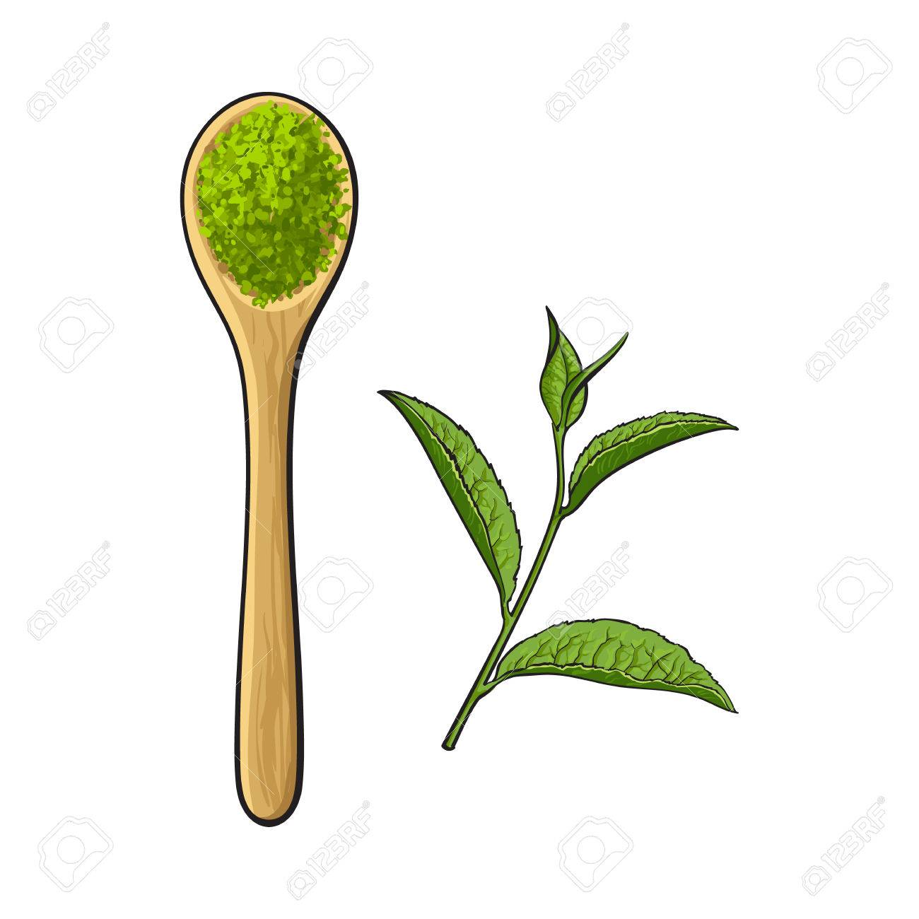 Top View Drawing Of Bamboo Wooden Spoon With Matcha Green Tea Royalty Free Cliparts Vectors And Stock Illustration Image 83305944