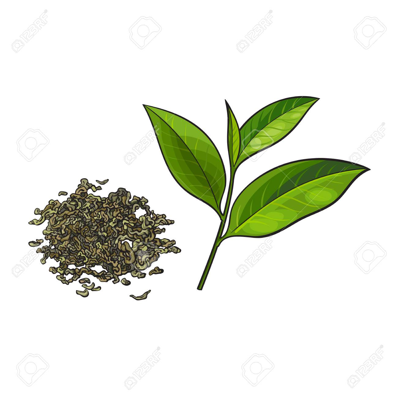 Hand Drawn Pile Heap Handful Of Dry Green Tea And Fresh Young Leaf