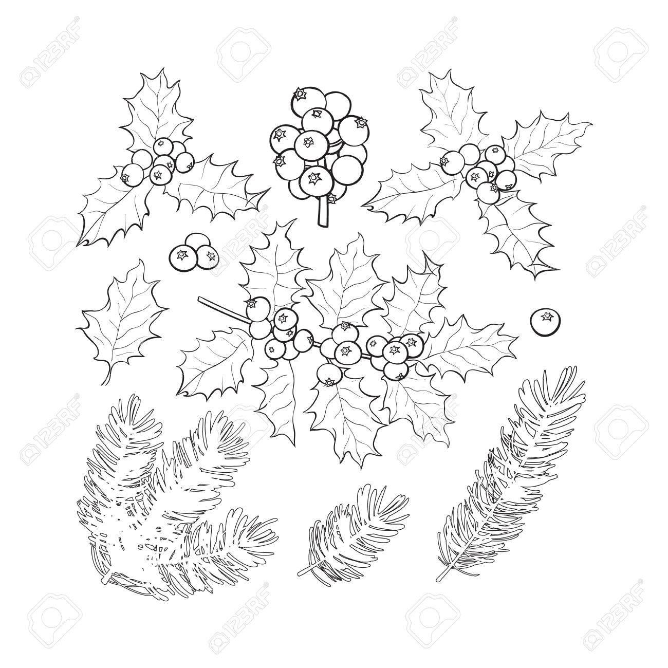 set of black and white fir tree and mistletoe branches with leaves  set of black and white fir tree and mistletoe branches with leaves and berries christmas