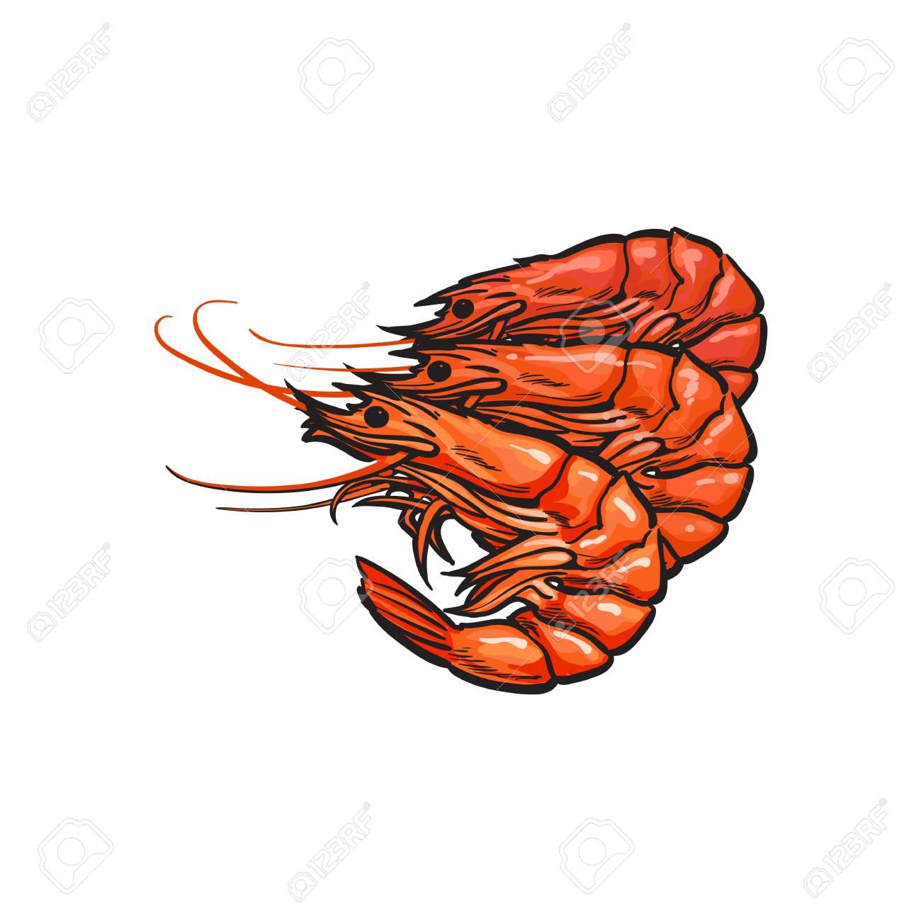 Vector Sketch Cartoon Sea Crayfish Lobster. Isolated Illustration ...