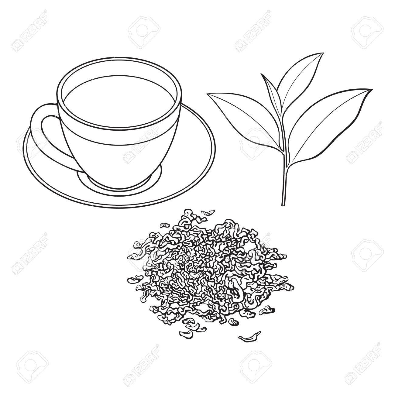Tea Cup Fresh And Dry Leaves Sketch Vector Illustration Isolated Royalty Free Cliparts Vectors And Stock Illustration Image 84899724
