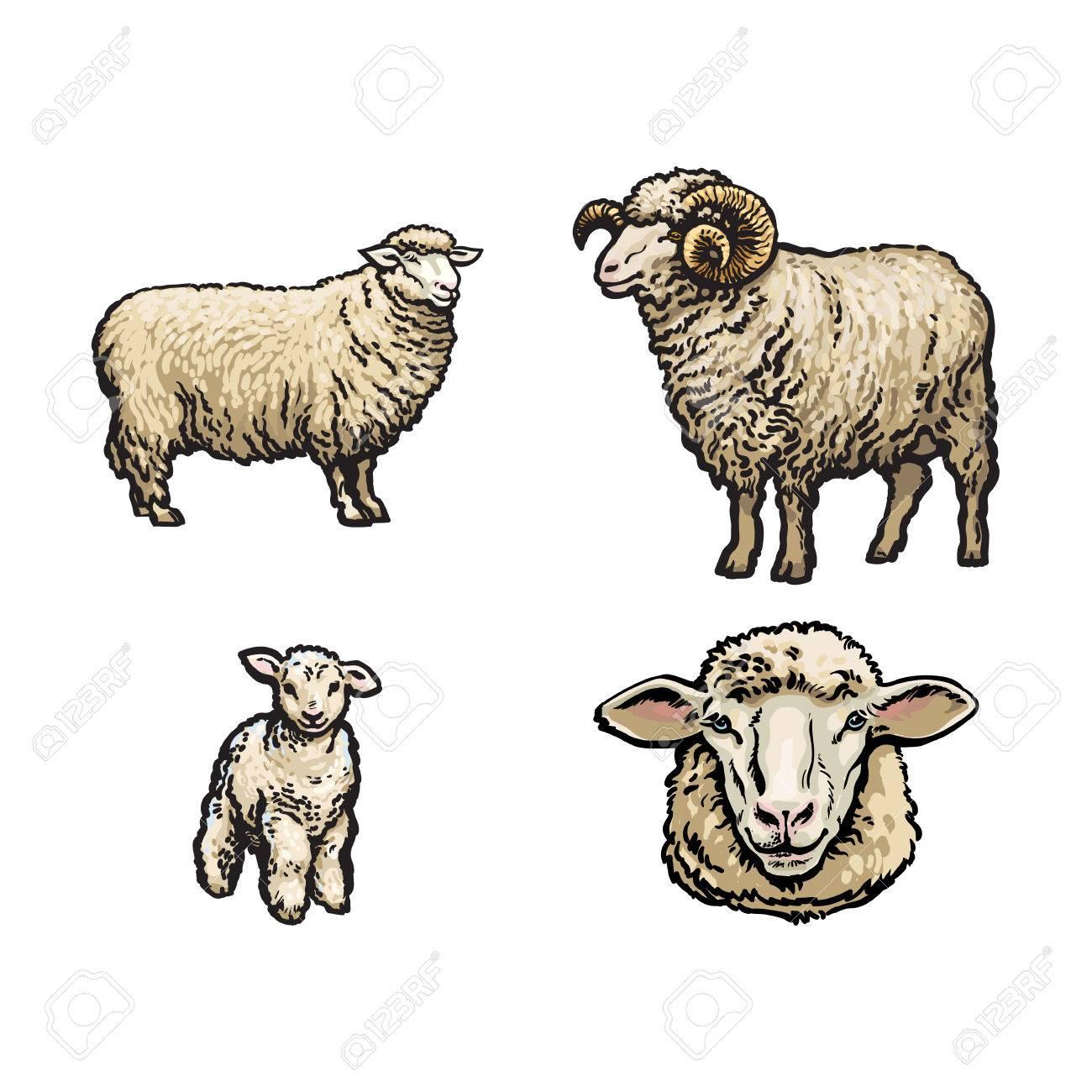 Croquis De Vecteur De Moutons De Dessin Anime Agneau A Cornes Et Ensemble De Tete De Mouton Illustration Isolee Sur Fond Blanc Animal Dessine A La Main Sans Cornes Bovins Animaux De