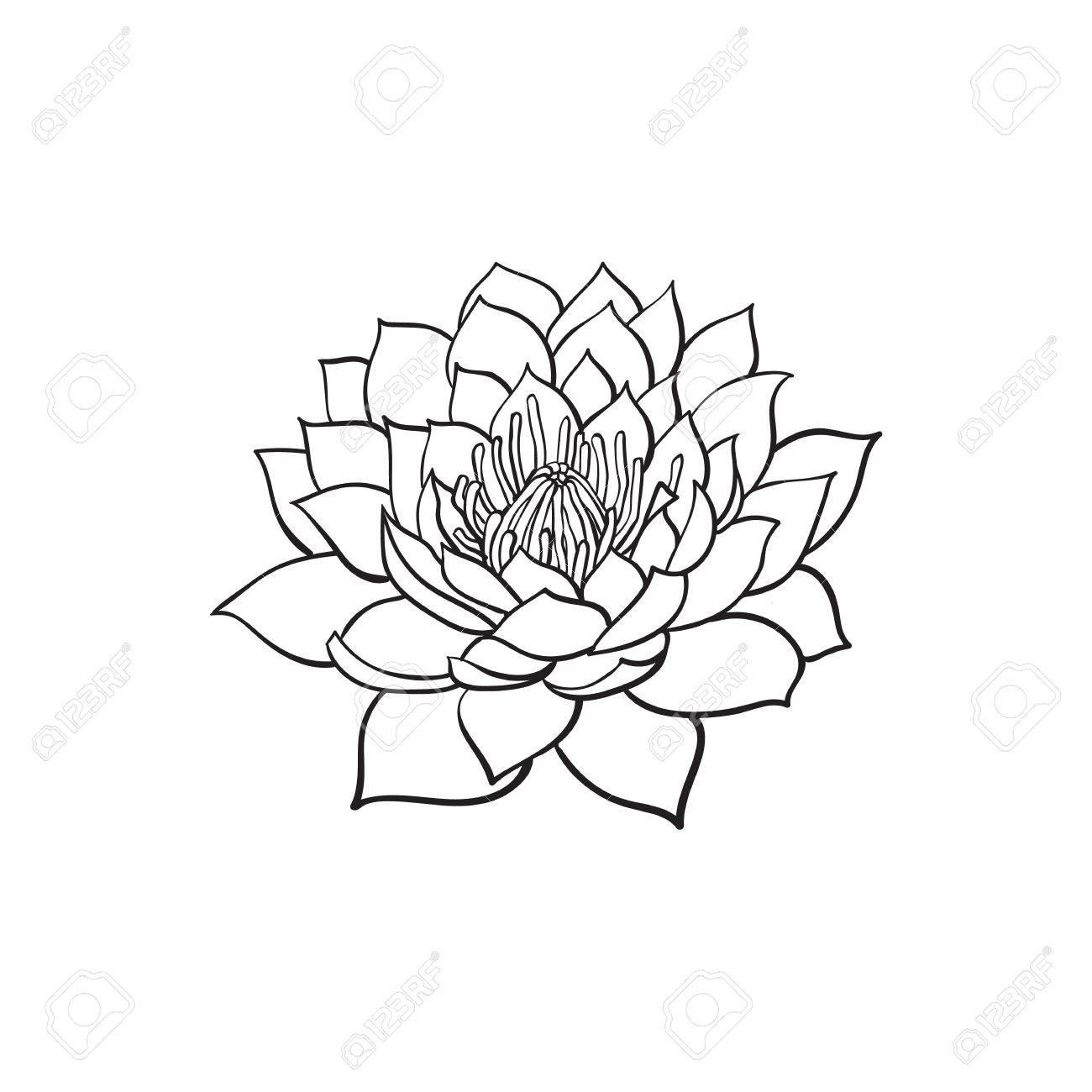 Vector Dibujo Flor De Loto De Dibujos Animados Flor En Flor