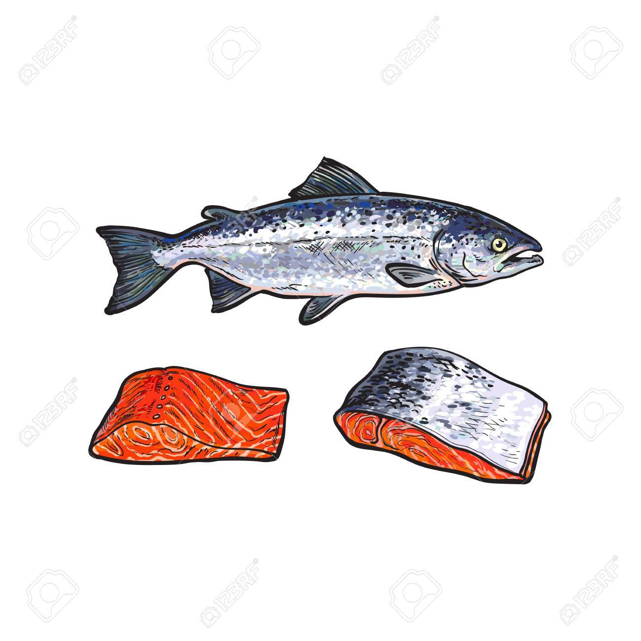Vector Sketch Cartoon Sea Red Salmon Fish And Meat Fillet Steak