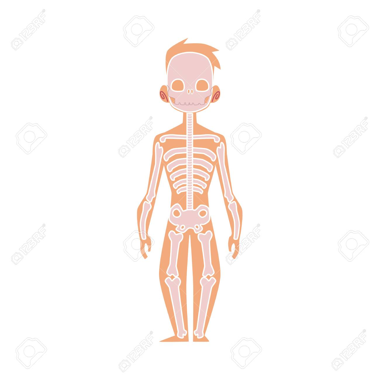 Estrutura Plana Do Vetor Do Corpo Humano Anatomia Ossos Masculinos Esqueleto Humano Sistema Esquelético Anatômico Educação Objeto De Design De
