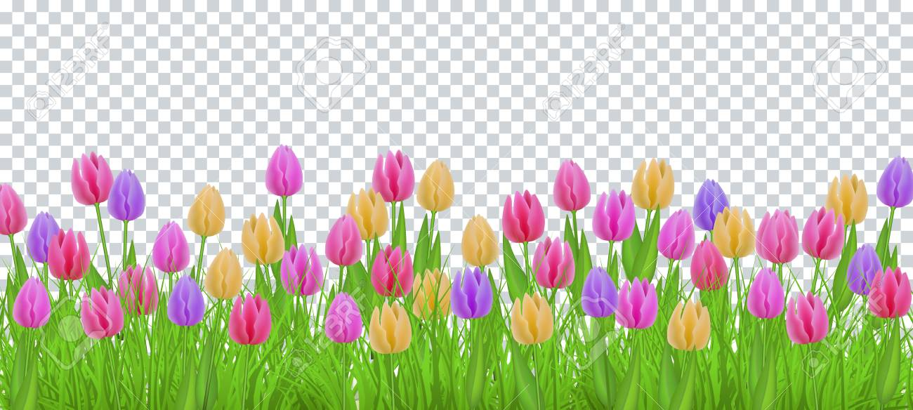 green meadow grass tulip flowers border frame template on