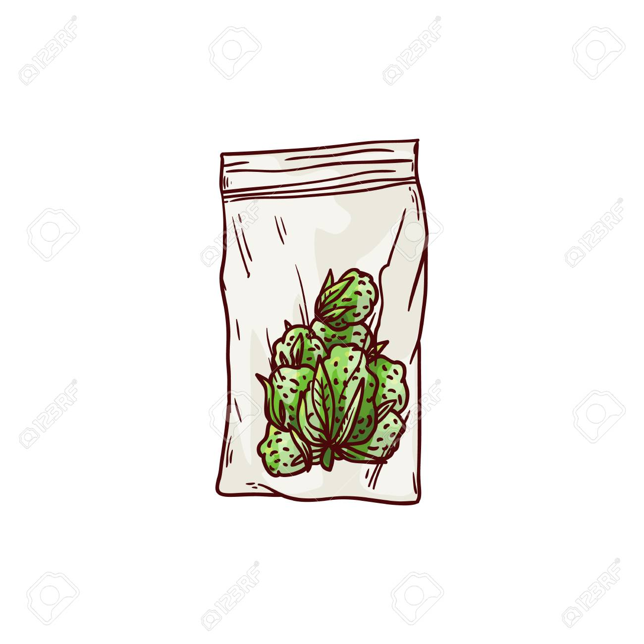Vector cannabis ripe buds in package sketch icon  Green hemp