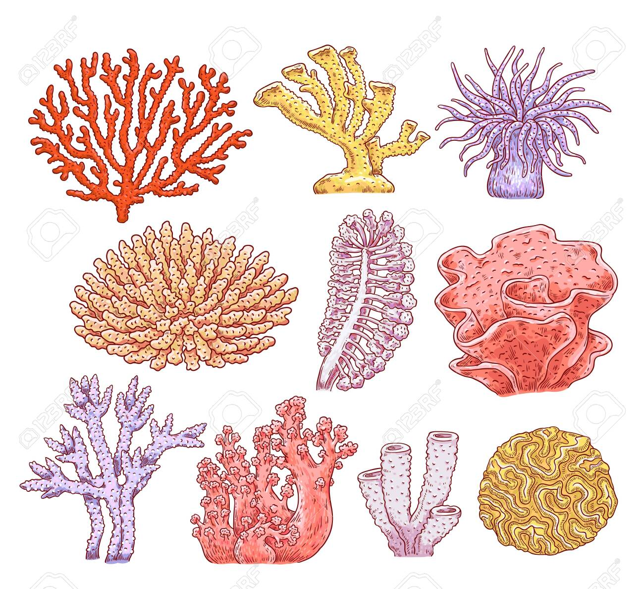 Set of various types of corals, aquarium underwater spongy plants and animals. Ocean marine underwater collection of flora and fauna. Hand drawn vector sketch illustration of sea corals. - 124419741